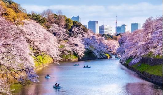 Życie w Japonii – nietypowe ścieżki (podcast)